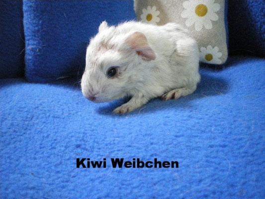 Kiwi Weibchen