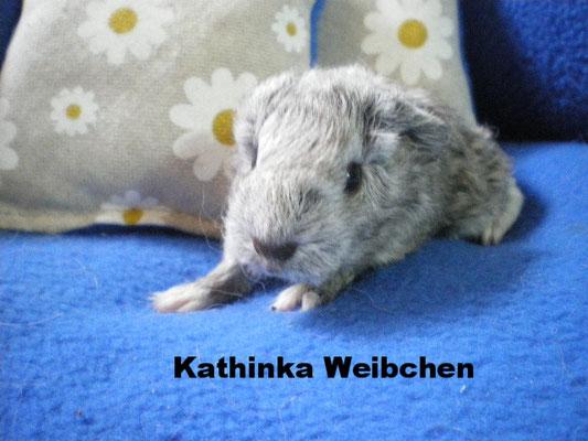 Kathina Weibchen