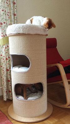Jarla versteckt ihren Kauknochen unten in der Katzenhöhle und wird dabei beobachtet...