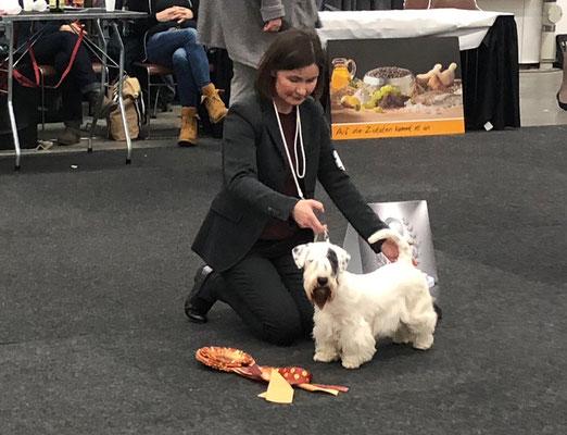 Smilla - BIS Jugendklasse - Platz 2 - Terriergruppe - Doglive 2018