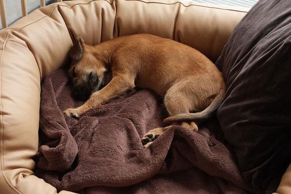 Jarla beim gemütlichen Büroschlaf...