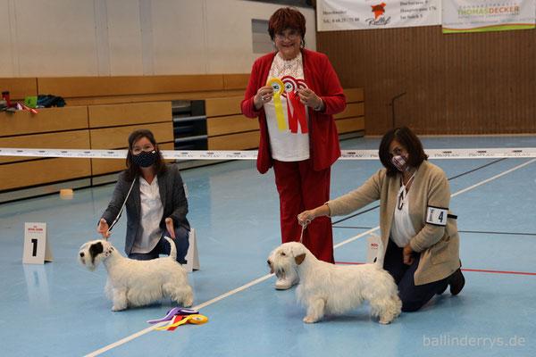 Smilla - BOS - Saarlandsiegerin - Terrierausstellung OG Merchweiler-Saarbrücken