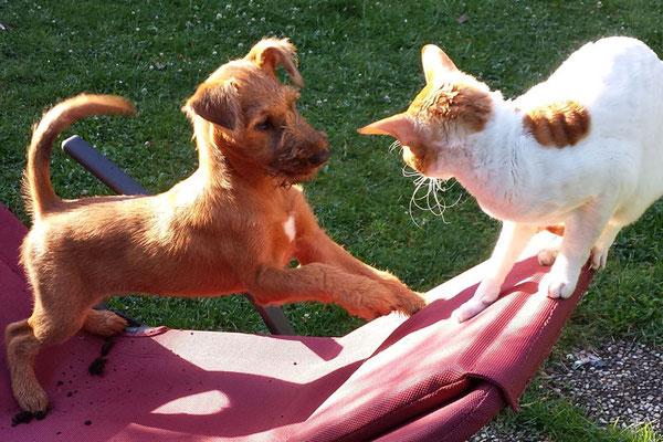 Jarla - Komm, lass uns spielen...!