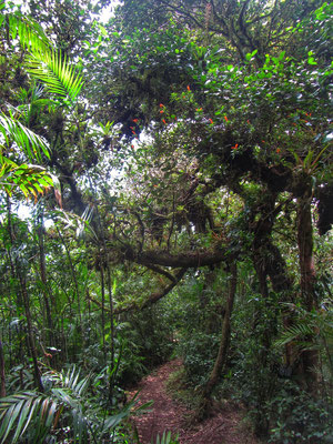 Mombacho Cloudforest