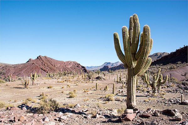 Paysages 95 - Bolivie