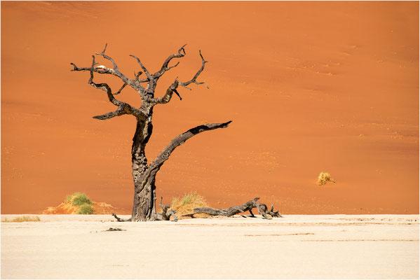 Paysages 82 - Namibie