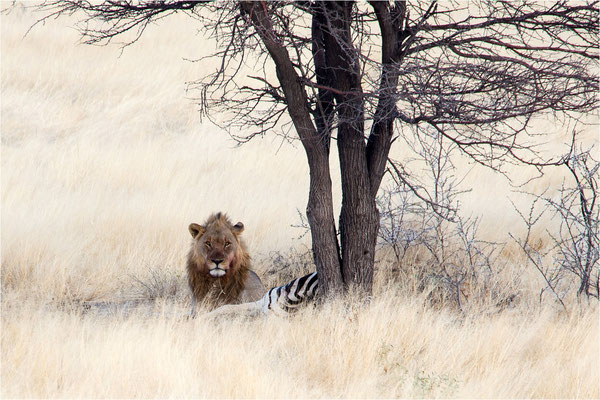 Lions 02