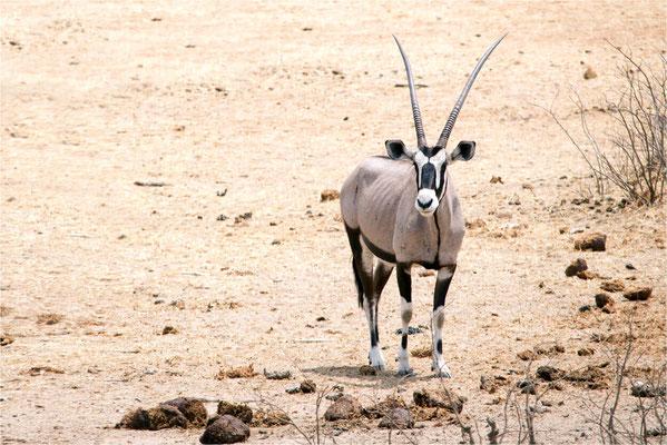 Etosha - Oryx 02