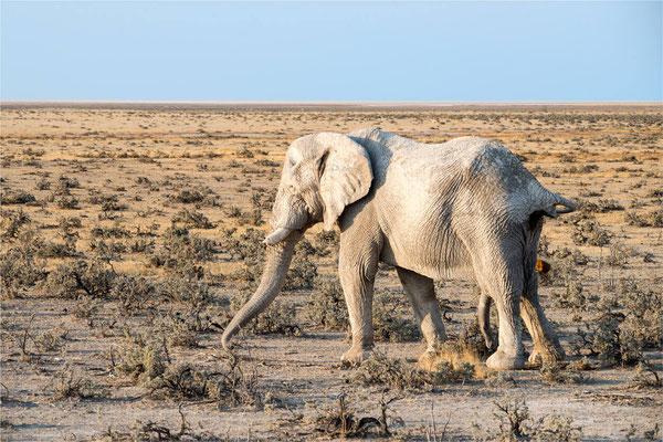 Etosha - Eléphants 09