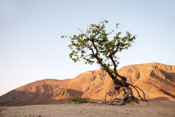 Paysages 78 - Namibie