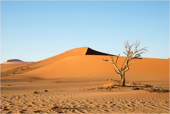 Paysages 81 - Namibie