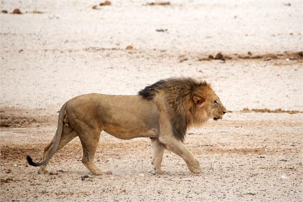 Lions 10