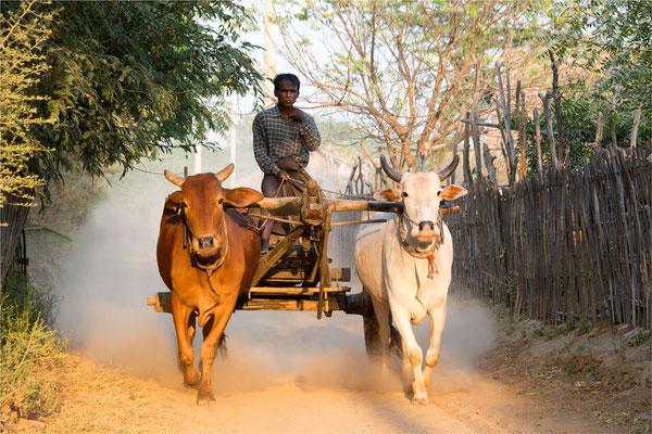 Scènes de vie 53 - Birmanie