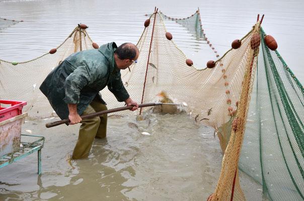 Pêche dans la Dombes 10