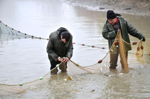Pêche dans la Dombes 08