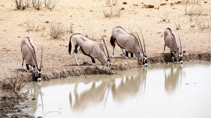 Etosha - Oryx 08
