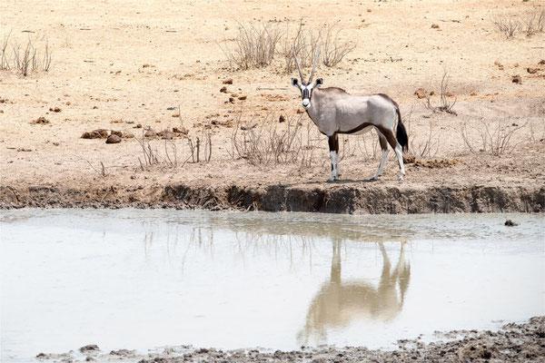 Etosha - Oryx 06