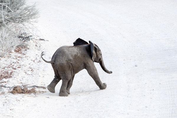 Etosha - Eléphants 16