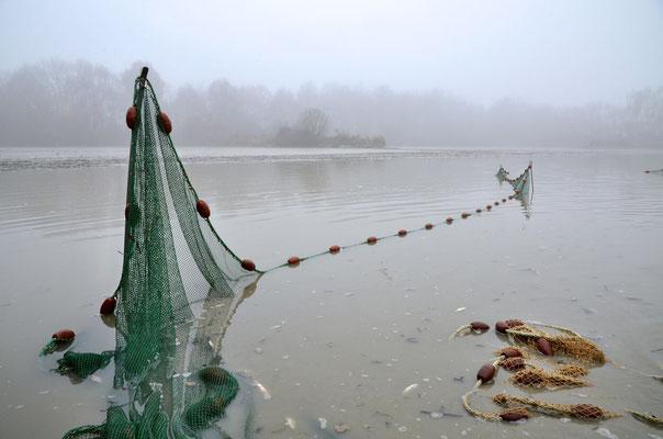 Pêche dans la Dombes 09