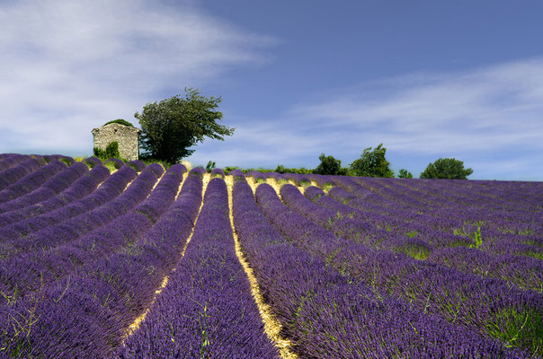 Paysages 36 - Provence