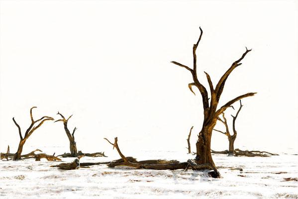 Auprès de mon arbre 03