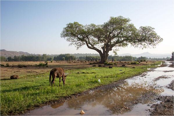Paysages 102 - Ethiopie