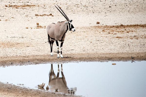 Etosha - Oryx 03