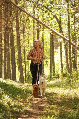 Skogsfeen gå promenad