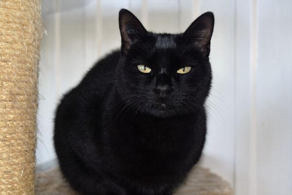 chatte noire exposée maman parka porno