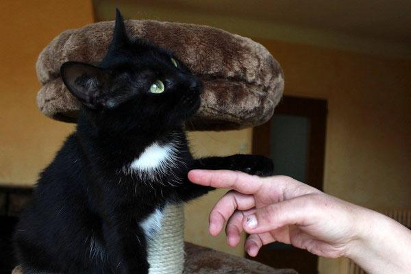 chat noir porte bonheur ou porte malheur refuge animalier de brax pr s d 39 agen 47. Black Bedroom Furniture Sets. Home Design Ideas