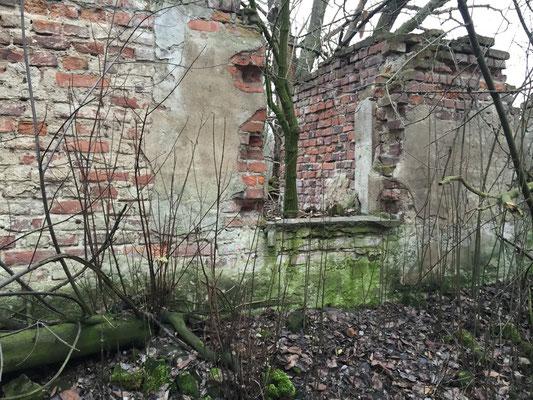 Eine Ruine mitten im Wald