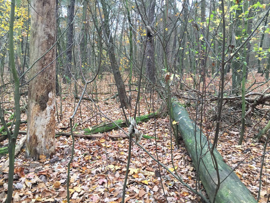 Cache 4 - Irgendwo im Unterholz