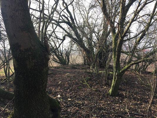 ...und wieder Bäume