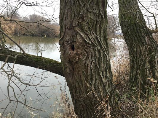 Ein Loch im Baum...klassisch