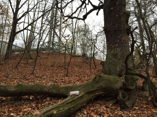 ...immer noch der bizarre Baum