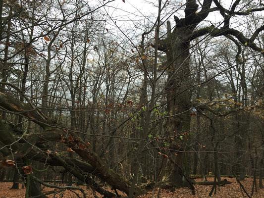 ...und der bizarre Baum -Cache 8