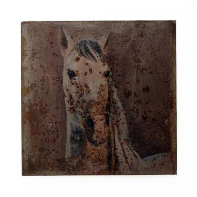 Foto auf Rost, Hors, Pferd, Foto auf Metall, Bild auf Metall, Fotokunst, E132/1