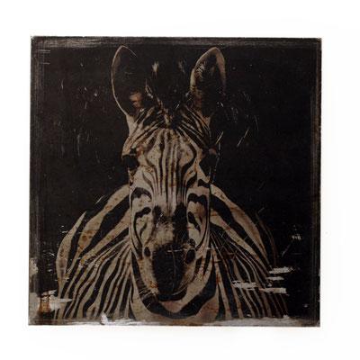 Foto auf Rost, Zoo, Zebra, Tierwelt, Foto auf Metall, Bild auf Metall, Fotokunst, E136/1