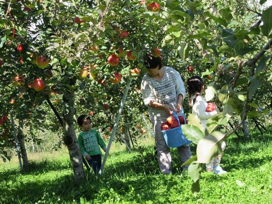 リンゴ狩り 竹村農園 松川町