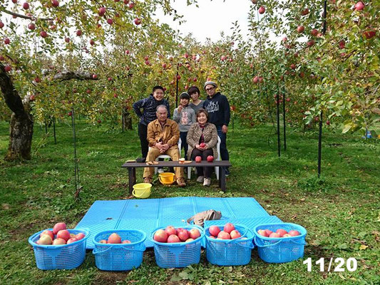 松川町 りんご狩り