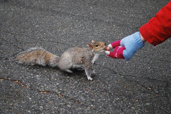 Nourrir les écureuils à Cloisters, un grand moment pour l'amoureuse des bêtes...