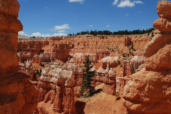 Dans Bryce Canyon