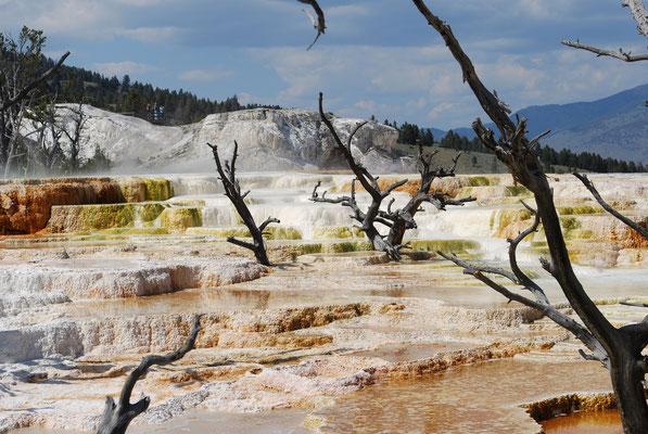 Yellowstone et ses phénomènes volcaniques.