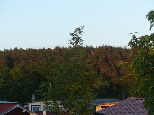 Blick auf dem Wald
