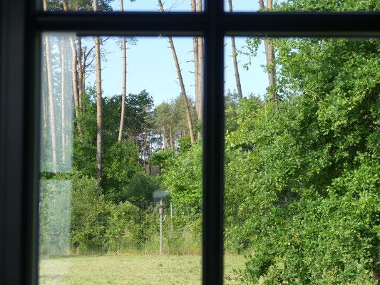 Ausblick auf den Wald vom Esstisch