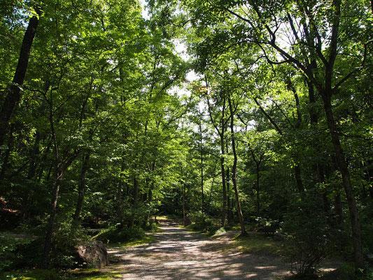 三景園キャンプ場