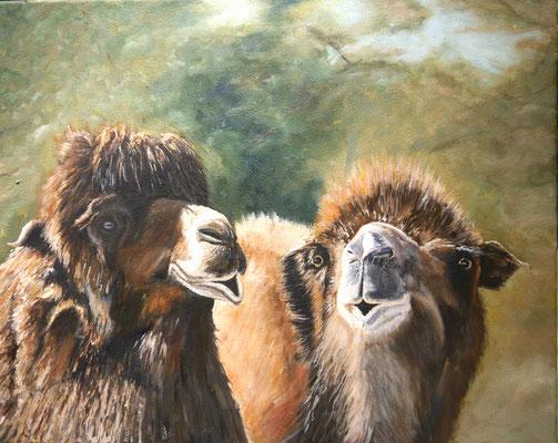 Kamelen, Frans Boers