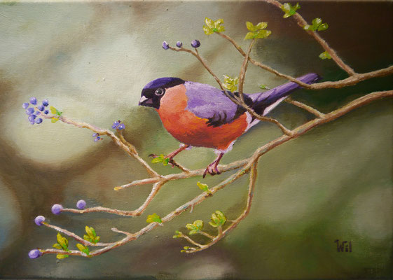 Kleurig vogeltje. Wil Kroon