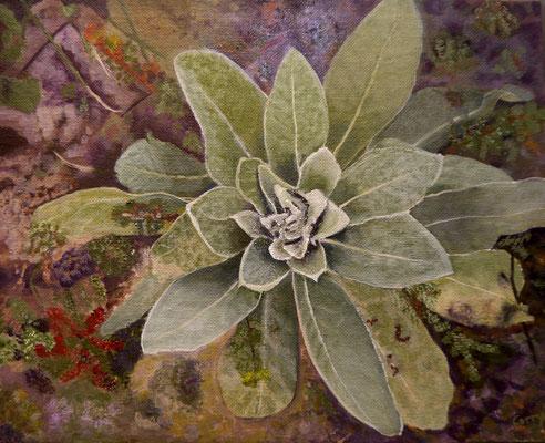 Vetplant, Corrie Kuipers