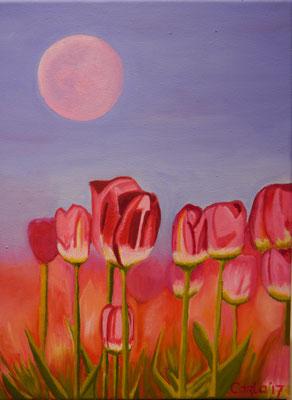 Tulpen, Carla van Haastrecht
